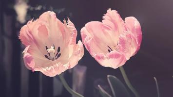 vyroci svatby kvetiny