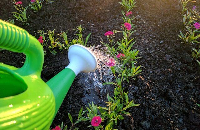 Přírodní hnojivo