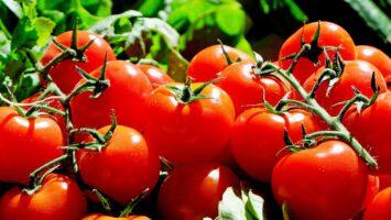 rajčatový protlak
