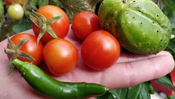 zelenina na balkone