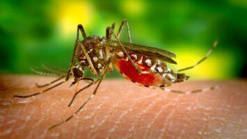 jak se zbavit komaru