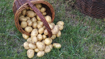 nove brambory