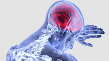 nador mozku