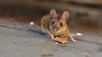 zbavit myší