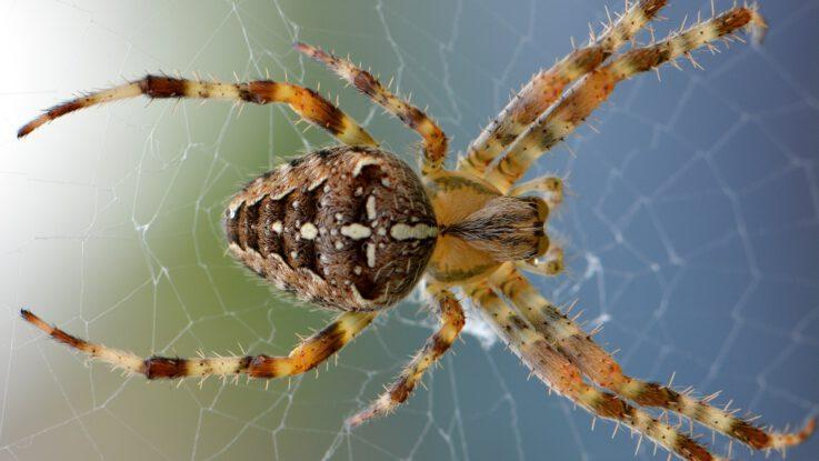 zbavit pavouků